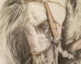 Horse Sketch Signed Print