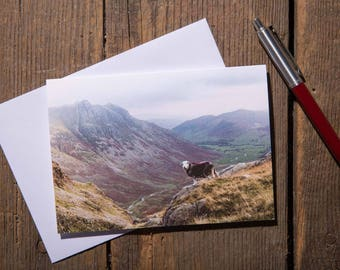 A Herdwick Sheep Watching Over Great Langdale - Lake District Greeting Card