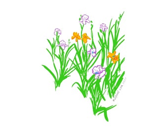 Irises from my window