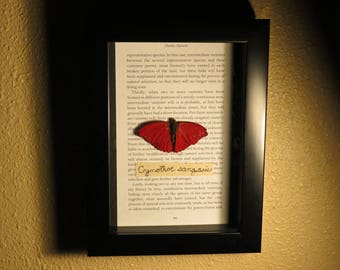 Blood-red Glider Butterfly in Shadow Box, Cymothoe sangaris