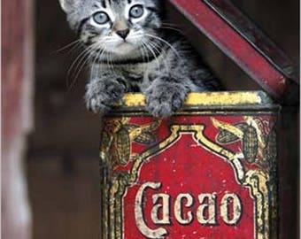 POSTER wall DECO * kitten / small cat in box * 30 x 24 cm