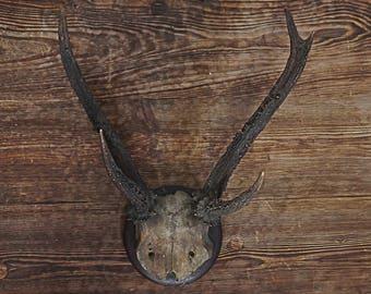 Old Bavarian Deer Antler