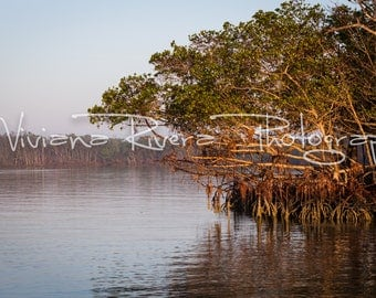 Everglades National Park_Oyster Keys_Mangroves_Trees_Early Morning_Water_Nature Photography_Fishing_Prints