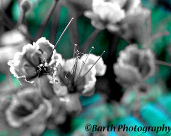 Art Photograph-- Flower-- Gifts for men women, for her, him, kids, blue, northwest, minimalist, nature, decor, wall art, prints,