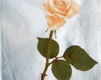 TOWEL in paper beautiful white rose #F048