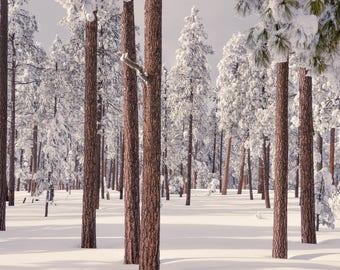 Trees, Winter, Forest, Landscape Photography, Digital Downloads