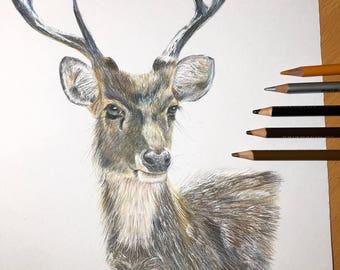 Deer portrait - print