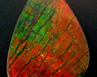 Gigantic Canadian Ammolite