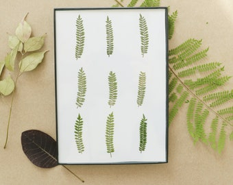 Pressed, Preserved, Dried Ferns and in Floating Frame with Off White Background 5x7