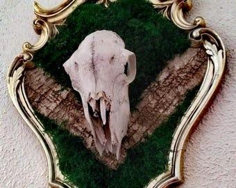 Frame skull foam/bark natural #Back to Bones