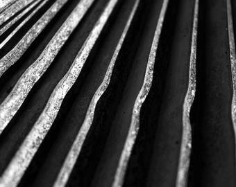 Black and White Photo of Ridges on a Texas Palm Tree Frond II  // Nature Photography in Austin, Texas