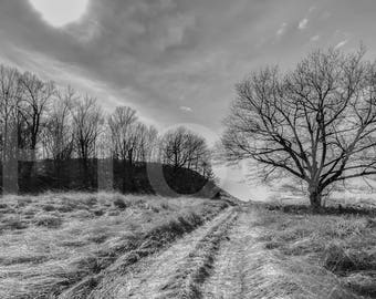 Black and White, Tree, Wall Art, Nature Photo, sky, Dune, Path, Grass, Hill, Cottage