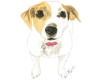 Abby-Jack Russell