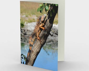 Iguana in Tree - Belize - Caribbean - Set of 3 Blank Cards - Greeting Cards - Thank You Cards - Nature Cards - Reptile Cards