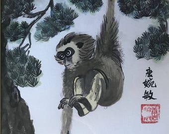 Monkey on pine tree