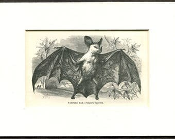 1865 Antique Print of a Vampire Bat