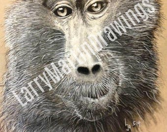 Baboon Pen and Ink Print