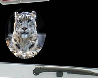 Blue Eyed Leopard Tiger Jungle Cat