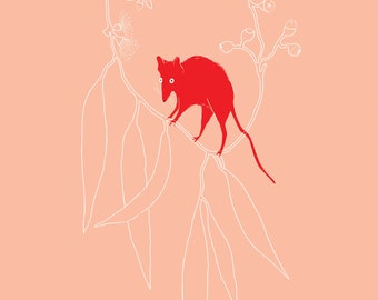 Little Red Antechinus A4 size