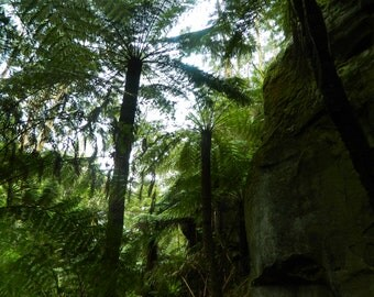 Digital Photo - Otway Rainforest 5 - Victoria Australia