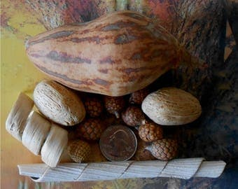 Seed Pods~Dried Seed Pods~Set of 13~1/2 to 4 1/2 Inchs~Dried Gourd~Nuts~Wood Shaving~ Seed Pods~Floral Supply~Fairy Garden~Craft Seed Pod