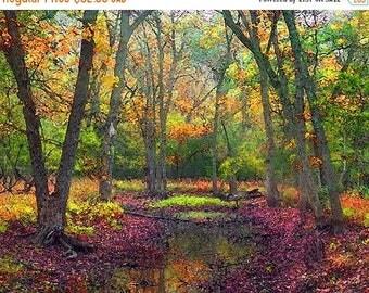 HUGE SUMMER SALE 40% off Autumn Landscape, Fall Landscape, Forest, Water, Pond, Trees, Landscape, Nature Photograph, Fine Art Painted Photog