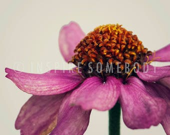 JUST BE 8x12 Pink Cone Flower Micro Fine Art Print
