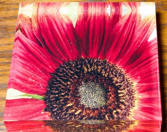Red Sunflower in Acrylic Block