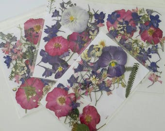 Pressed Flowers, 25 Real Dried Flowers, Decorations, Wedding Decor, Invitations,  Invitations, Decoupage, Resin Jewelry, Craft Supplies
