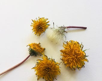 Dried Dandelions, Flowers, Yellow Blossoms, Wedding Decorations, Biodegradable, Craft Supplies, Real Flowers, Wildflowers, Natural Decor