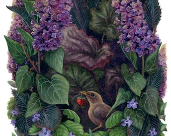 Fine Art Print of Original Watercolor Painting - The Strawberry Wren