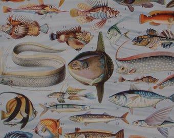Original LARGE Antique BOOK Illustrations of Fish 'POISSONS' by Adolphe Millot from Nouveau Larousse Illustré dated 1932