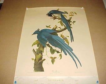 Lithograph Audubon Bird Print Columbia Jay From 1948 Calendar