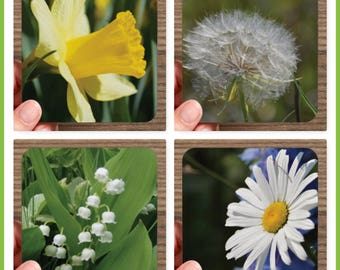 Set of 4 High Gloss Photo Coasters – FLOWERS – Cork Back in Storage Case – Lily of the Valley Daffodil Daisy Seed Head ~ Great Gift Idea