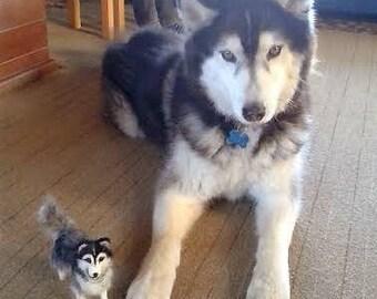 Needlefelted dog/Needlefelted Husky/Dog miniature/OOAK/Custom made pet miniature