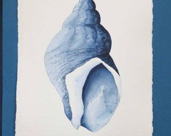 Original watercolour illustration painting of a whelk sea shell in indigo and blues ocean beach style coastal decor series set collection