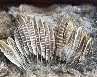 Pheasant Wing Feathers - Lot of 16