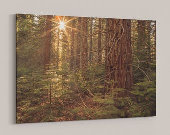 California Forest Landscape Canvas Wrap, Wall Art, Forest Photography, Trees, Sunshine