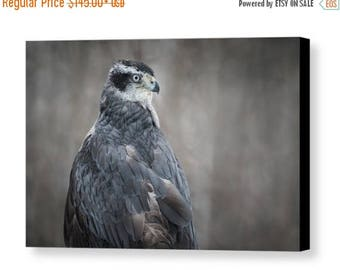 ON SALE Goshawk Gallery Wrapped Canvas, Raptor Wall Art, Bird of Prey Nature Photography, Ready to Hang, Unique Home and Office Decor, Hawk