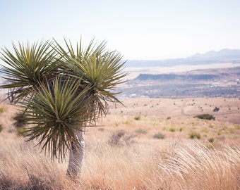 Texas photography, texas decor, west texas, high desert, desert photography, large wall art, yucca, big bend, marfa, landscape photography