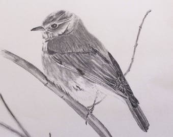 Original graphite drawing art bird perched on branch