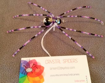 Purple and Black Spider