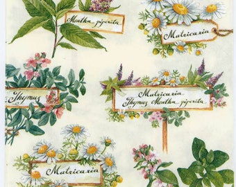 Decoupage Napkins | Herb Garden Thyme Chamomile Mayweed | Thyme Napkins | Herb Napkins | Party Napkins | Paper Napkins for Decoupage