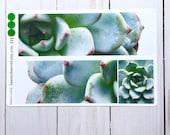 succulent planner stickers | green succulent 01 photo stickers | full box planner stickers | green plant stickers | vinyl matte stickers |