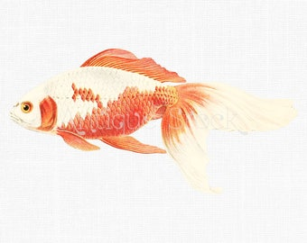 Fish Clipart 'Watonai Goldfish' Digital Download PNG Image for Collages, Transfers, Prints, Decoupage, Invitations, Card Making, Design...