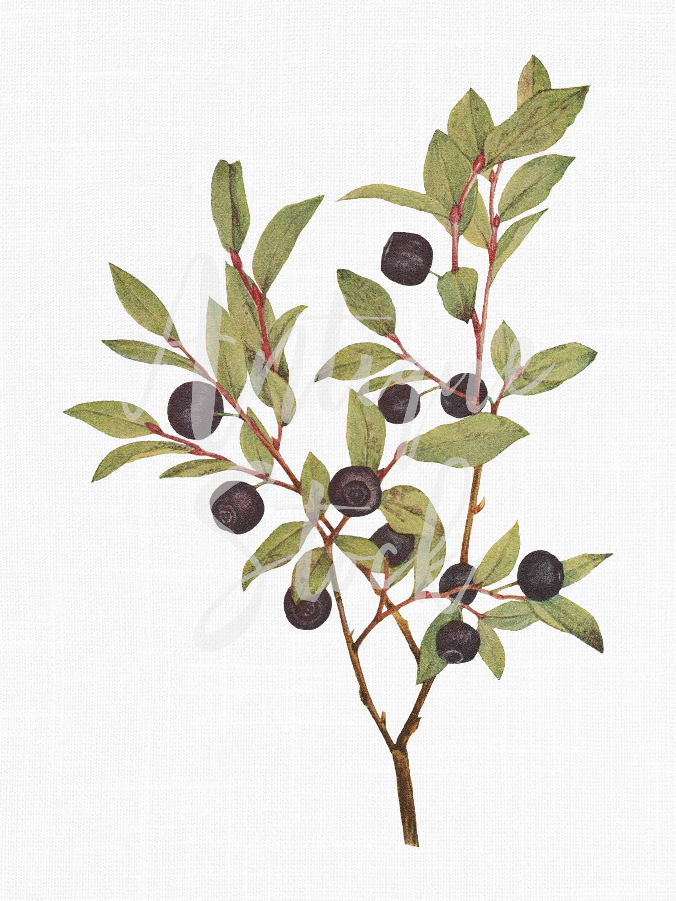 Digital Download Huckleberry Branch Botanical