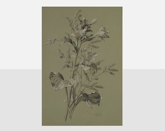 Antique Original Flower Drawing Antique Swiss Botanical