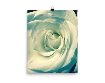 White Rose Black and White Photo paper poster