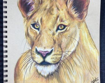 Original Lioness Drawing in Colored Pencil