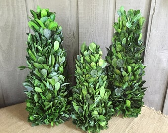 Topiaries/ holly topiaries/preserved holly topiaries/ tablescaping topiaries/ topiary decor/ cone topiaries/dried green holly leaves topiary